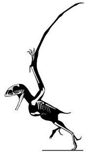 1Batrachognathus volans