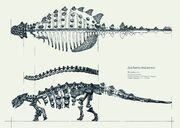 Short-legs-animal-anatomy