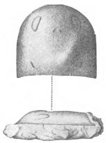 Nanahughmilleria 2
