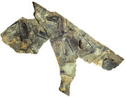 Yi-fossil