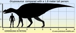 Gryposaurus-size