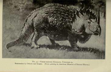 Triceratops (C. Knight, 1897)