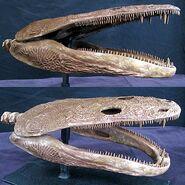 AMPHIB metopaosaurfeb2011 GASTON