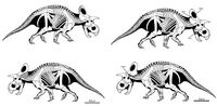 Crittendenceratops krzyzanowskii-novataxa 2018-Dalman Hodnett Lichtig et Lucas--