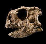 Psittacosaurus gobiensis