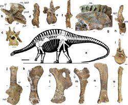 Skeletal reconstruction and exemplar skeletal remains of Lingwulong shenqi