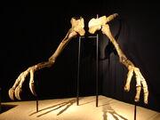Deinocheirus hand 01
