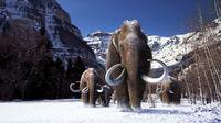 Mammoth-1 wide-c92251c02c4611438550b130393048dac3c0d79f
