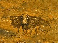 Damesellidae - Neodrepanura premesnili