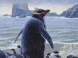 Чатемский пингвин