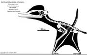 0Germanodactylus