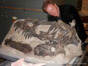 Daspletosaurus Skull 02