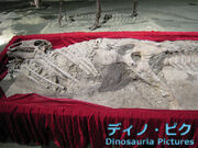 Equijubus fossil