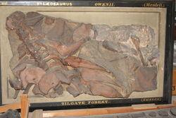 Hylaeosaurus fossil Dublin Museum