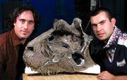 Carnotaurus fossil