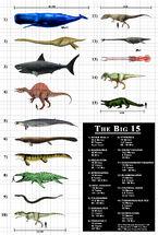Top-15-largest-predators-infographic