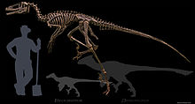 Dakotaraptor lateral Wiki