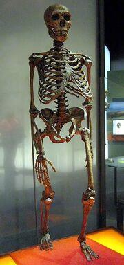320px-Neanderthalensis