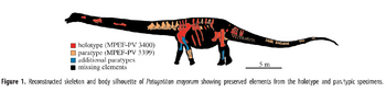 Reconstructed skeleton Patagotitan