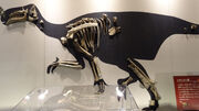 Altirhinus fossil