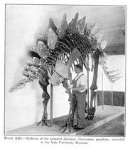 Large lull stegosaurus