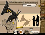 Thalassodromeus-size