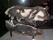 Tyrannosaurus Black Beauty