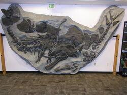 Stegosaurus DMNH 2818