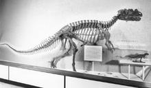 Ceratosaurus nashornis