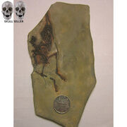 P-Flame-Dinosaur-Fossil-21-11CM-Stone-Crafts-Nemicolopterus-Wyvern-Pterosaur-Fossil-For-Home-Decoration jpg 640x640
