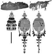 Specimen 100-1305