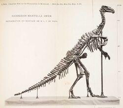 Iguanodon Dollo