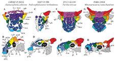 Акайнацефал, нодоцефалозавр, тархия, минотаврозавр