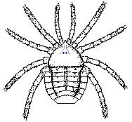 Палеотарбус