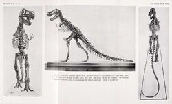 First three photos ever taken of the first-ever T. rex mount at the American Museum of Natural History. Abram Anderson took all three pictures in 1915