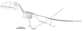 1Dimorphodon skeleton Witton