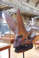 Arsinoitherium by loup de feu