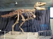 Tarbosaurus skeleton 01