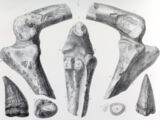 «Мерозавр»