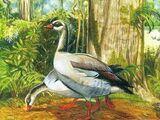 Маврикийский земляной гусь