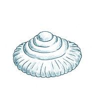 Ediacaran-animals-cyclomedusa