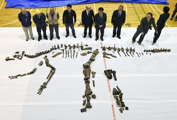 Hadrosaurid , Hokkaido,