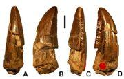 Ostafrikasaurus-teeth-large