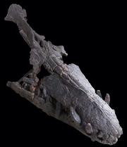 Pliosaurus rossicus skull