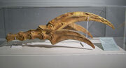 Therizinosaurus claws