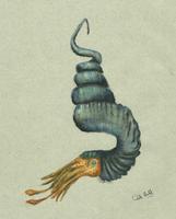 Didymoceras 2