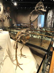 Hagryphus giganteus1