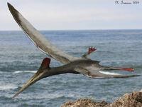 Pterodactylus-m