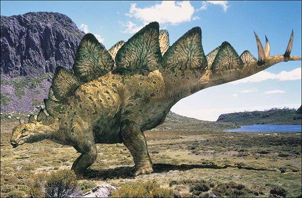 Картинки по запросу Стегозавр