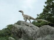 Acheroraptor d8sue7u-pre
